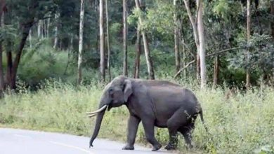 Photo of 47-year-old man trampled to loss of life by elephant in Uttarakhand – india information