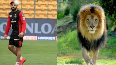 Photo of RCB ask fans to 'spot the difference' between Virat Kohli and a lion; Yuzvendra Chahal, CSK respond