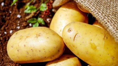 Photo of Potato costs in Bengal skyrocket, merchants blame it on export